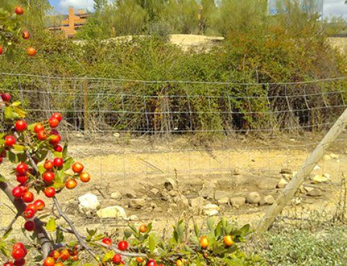 El enclave natural de la Retorna será objeto de mejora y conservación gracias a una propuesta de Contigo
